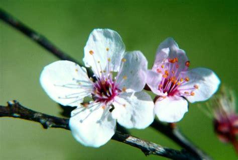 costo dei fiori di bach associazione culturale per l arteterapia la creativit 224 e