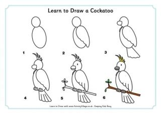 libro drawing birds learn to learn to draw birds