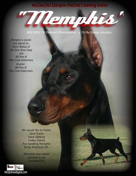 mystis salon in memphis memphis dobermans show dogs rio grooming school and