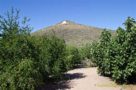 Farm And Garden Tucson by Mission Garden At Tucson S Birth Place Celebrates El Dia
