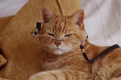 alimentazione gatto anziano dieta gatto anziano archivi ambulatorio veterinario e