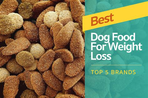 top 10 foods for puppies best food for weight loss top 5 brands