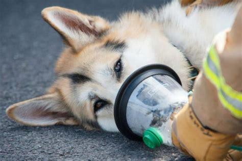 harmful wildfire smoke  pets  animals  air