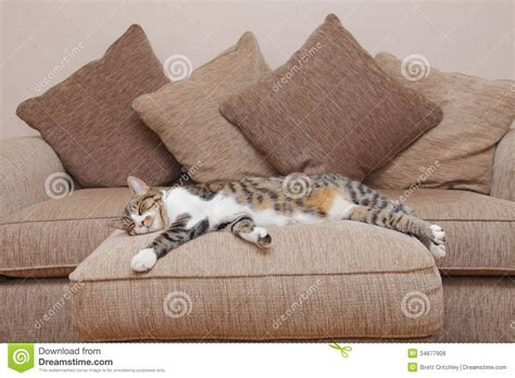cat on sofa cozy cat royalty free stock images image 34677909