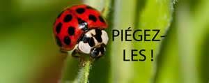 Delightful Comment Planter De L Ail #6: Sedebarasserdescoccinelles.png