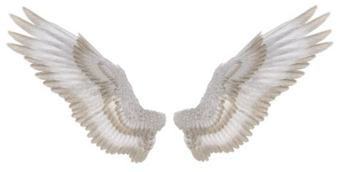 wings i stock png precut animals favourites by black cat16