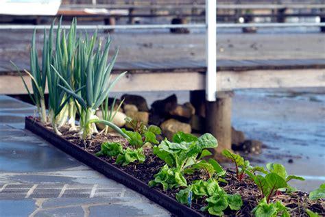 edible gardens edible garden michael cooke garden design