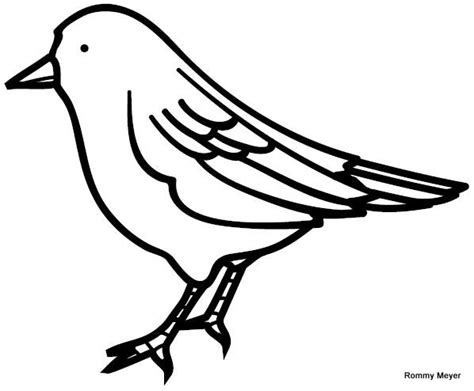 como dibujar un pajaro pajaro wchaverri s blog