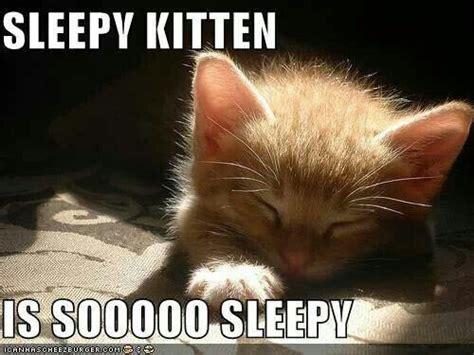 Sleepy Kitty Meme - 20 best sleepy memes sayingimages com