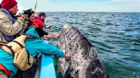 day baja california whale watching