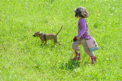 small family dogs risk to small children from family often underestimated
