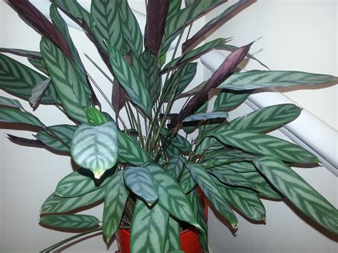 foliage house plants identification houseplant identification and care askjudy houseplant411