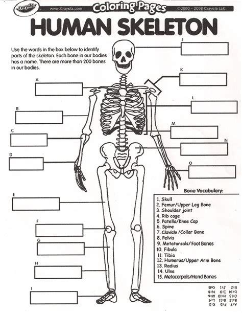 bone worksheets skeletal system worksheet high