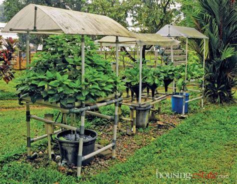 menanam cabe hidroponik nft budi daya tanaman hidroponik dinamis