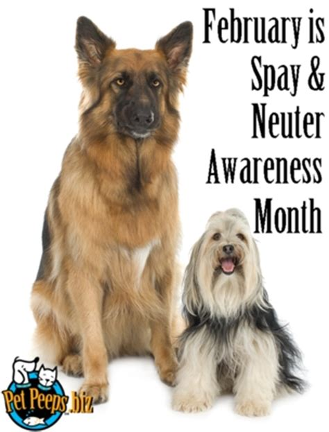 what is neutering a february is spay neuter awareness month pet peeps