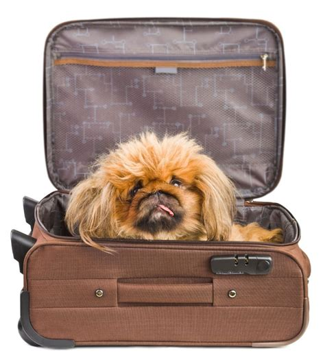 can you take dogs on amtrak 5 things you need to about bringing your pets on amtrak washingtonian