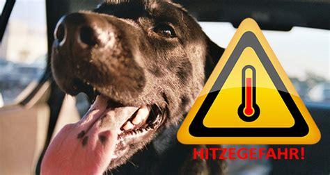Hund Im Auto Hitze by Hund Bei Hitze Im Auto Bis Zu 7 500 Strafe Your