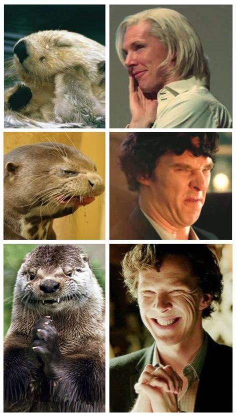 Cumberbatch Otter Meme - other otter memes benedict cumberbatch pinterest
