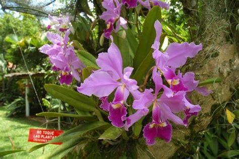 imagenes flores colombianas imagenes de orquideas colombianas buscar con google