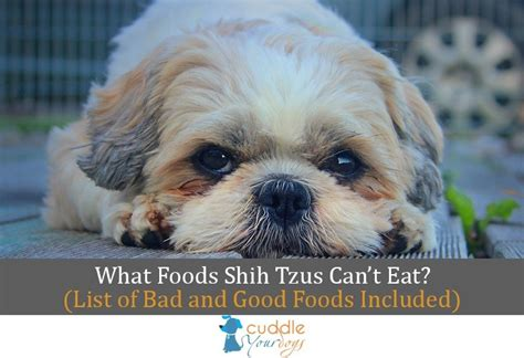 what to feed shih tzu what foods shih tzus can t eat lists of bad foods