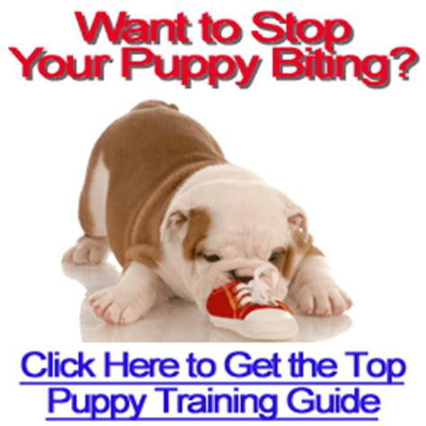 how do i stop my puppy from biting how to housebreak a puppy