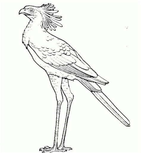 Secretary Bird Other Raptor Coloring Page For The Birds Of Prey Coloring Pages