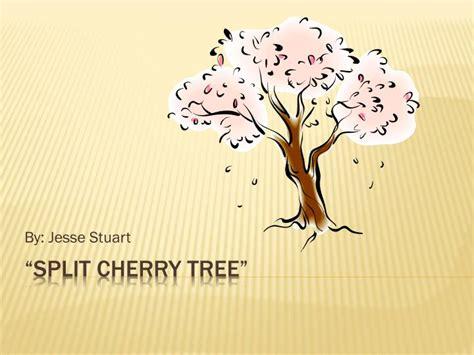 the split cherry tree 5 points answers ppt split cherry tree powerpoint presentation id 1592745