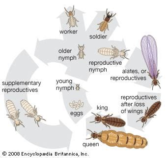 Termites Meaning In Korean