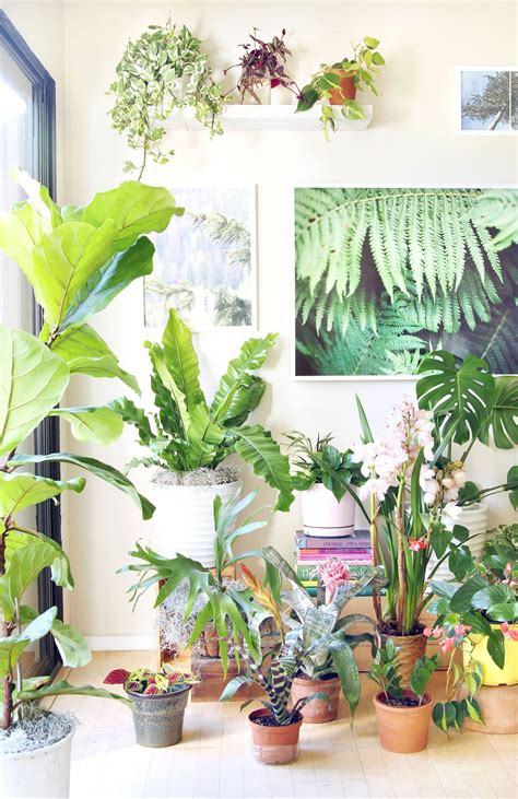 cool small palnts to grow 18 most beautiful indoor plants 5 easy care tips