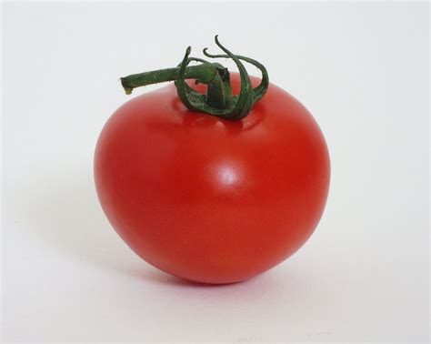 The Tomato by Hip And Conservative A Skeptical It S All