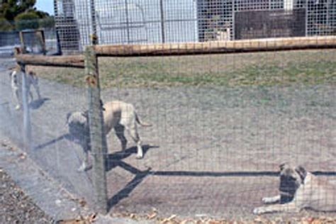how to keep dog in yard without fence blog the fencing store latest news product info