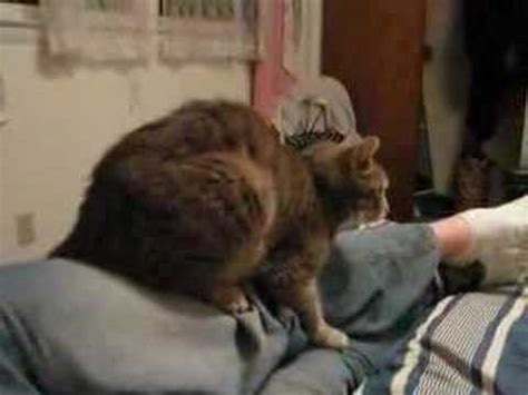 guy humping bed this old cat humps a man s leg youtube