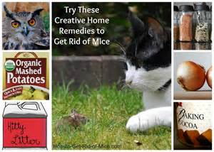 mouse remedies lego liberators arrghh pests to