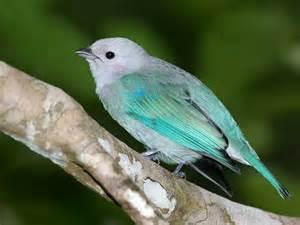 beautiful bird beautiful birds picture