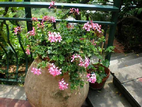 fiori in vaso come fare un vaso di fiori guide