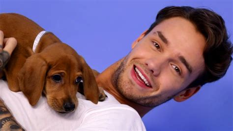 buzzfeed puppy liam payne plays with puppies