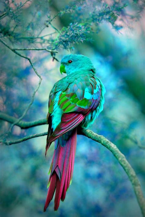 bird with colorful feathers 17 best images about colorful birds on