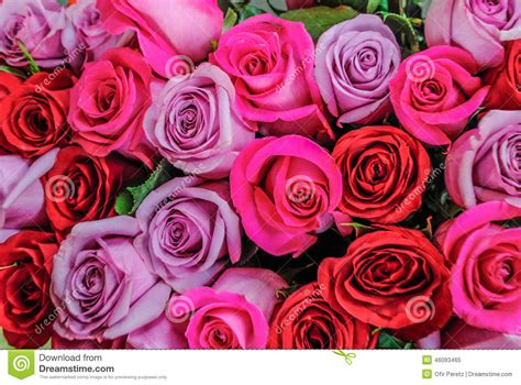 flower expert red and pink roses image beautiful pink and red roses flowers at a parisian flower