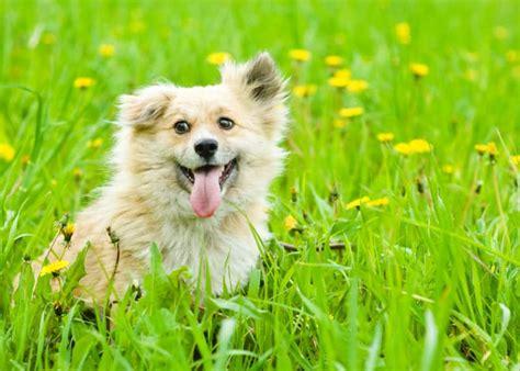 Was Tun Gegen Grasmilben 3757 by Grasmilben R 246 Tliche Pickel Auf Deinem Hund Mydog365 Magazin