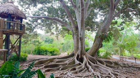Selby Botanical Gardens Sarasota Fl Selby Botanical Gardens In Sarasota Florida Expedia
