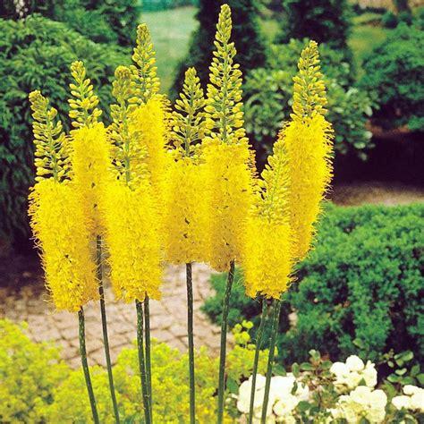 cottage garden bulbs best 25 cottage garden plants ideas on flower