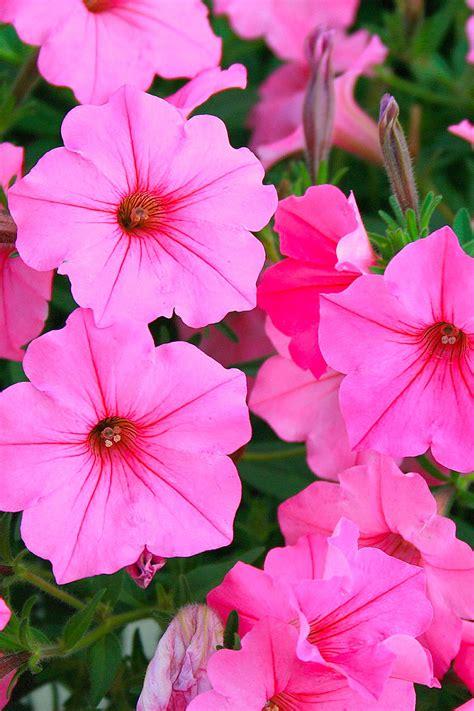 vasi da appendere fiori e piante per vasi da appendere il giardino di veca