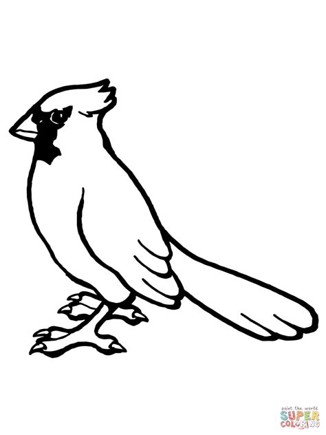 nothern cardinal bird coloring page free printable