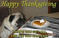 thanksgiving pug pictures pugs on pugs memes and pug meme