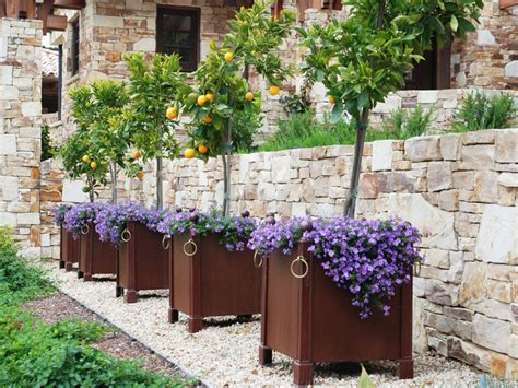Fruit Trees In Planters by The World S Catalog Of Ideas