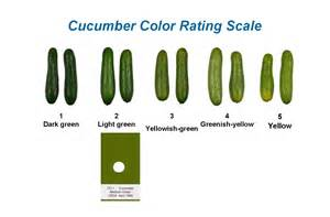color rating vegetables uc postharvest technology center