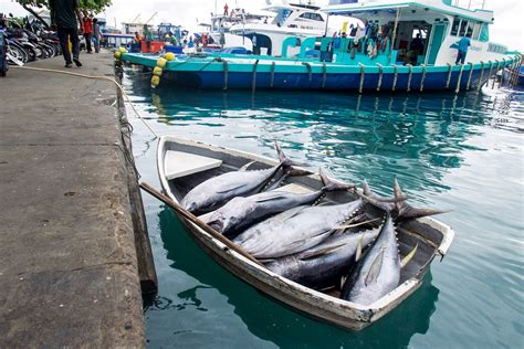 tuna fishing boat jobs it s all about the tuna at this fish market in the