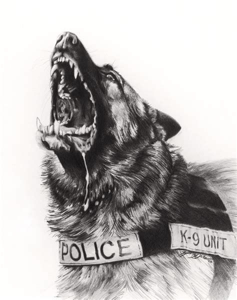 drawn german shepherd police dog pencil and in color