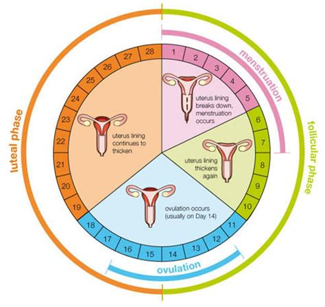 Menstrual Cycle And Ovulation Calendar Menstrual Period Blood Clots 10 Alarming Facts To Look