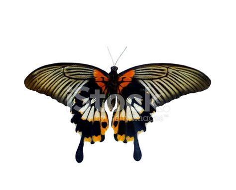 Gamis Buterfly Premium White Pasmina colorful butterfly isolated on white stock photos freeimages